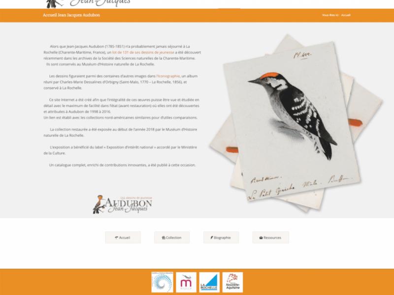 Dessins Audubon